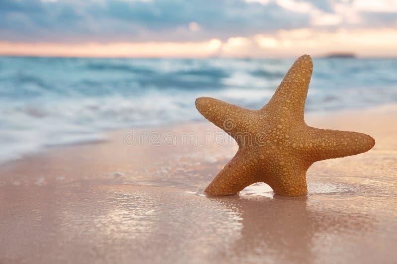 Rote Starfish auf Sand setzen, mit Ozeanhimmel und Meerblick auf den Strand, stockfotografie