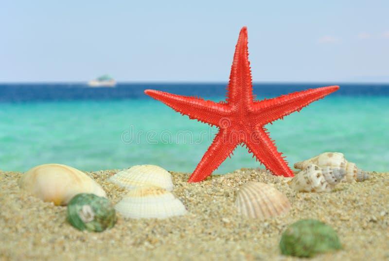 Rote Starfish auf Strand stockbild