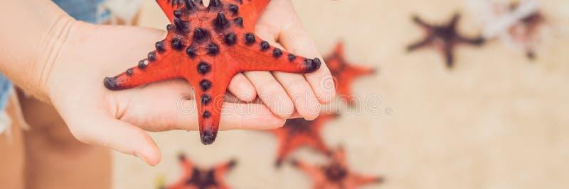 Rote Starfish in den Händen, nahe bei der Meer-FAHNE, langes Format lizenzfreies stockbild