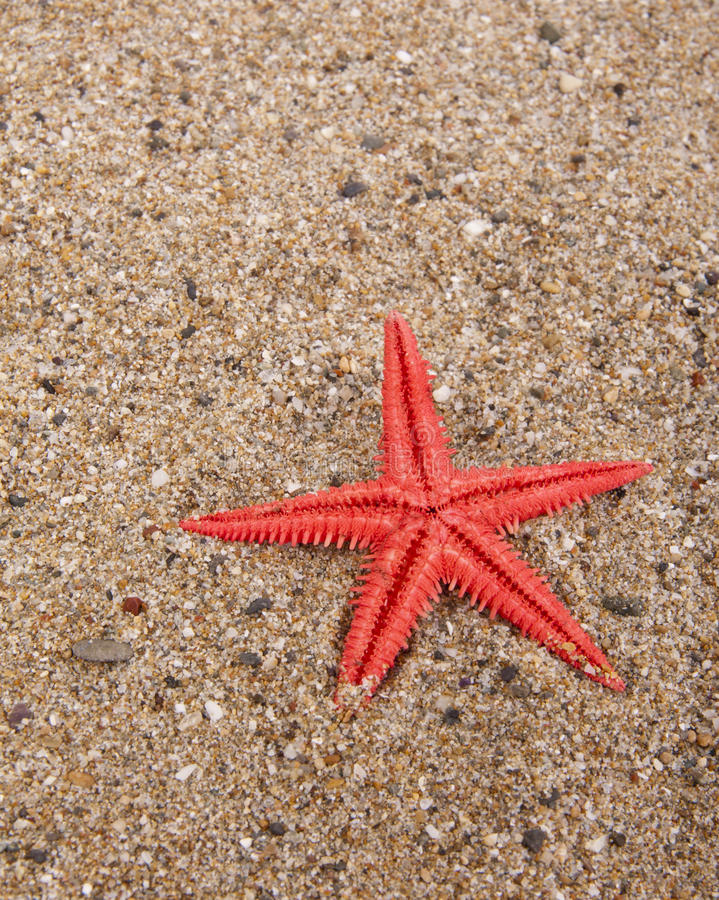 Rote Starfish im Sand stockfotos