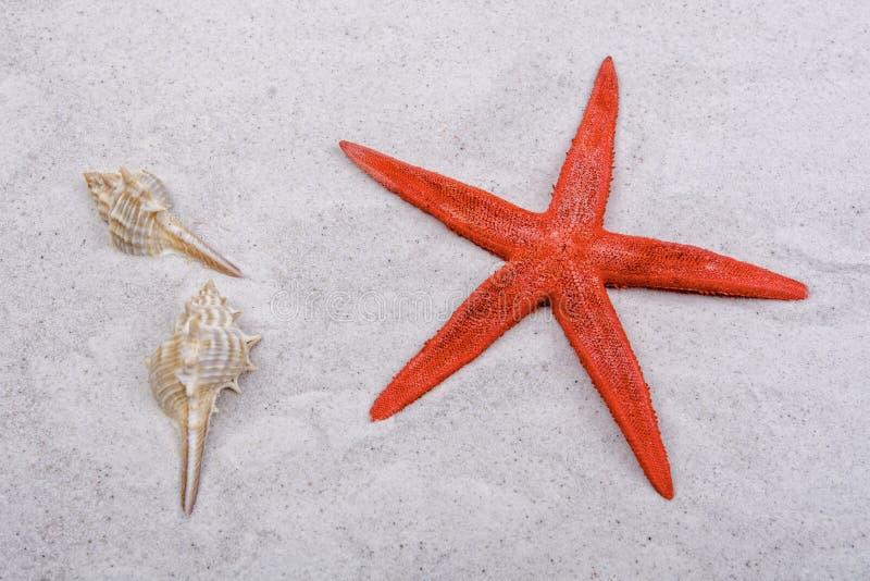 Rote Starfishes und ein Oberteil auf einem Sand stockfotografie