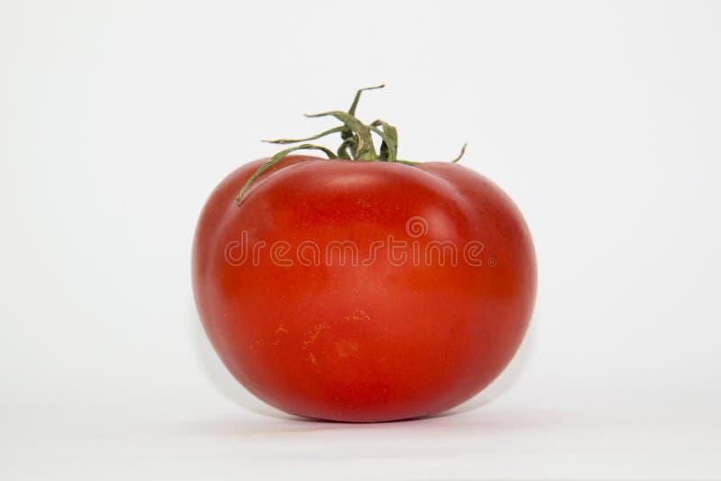 Rote Tomate lizenzfreie stockbilder