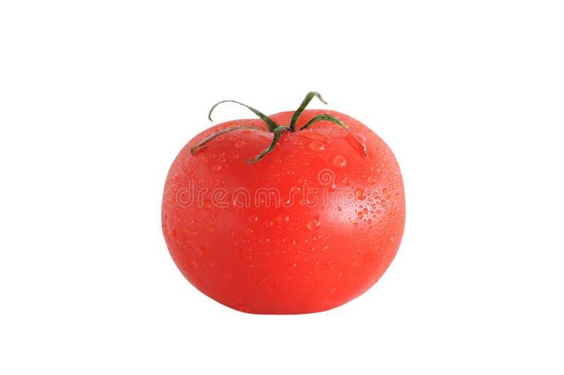 Rote Tomate mit Wassertropfen lizenzfreie stockfotografie