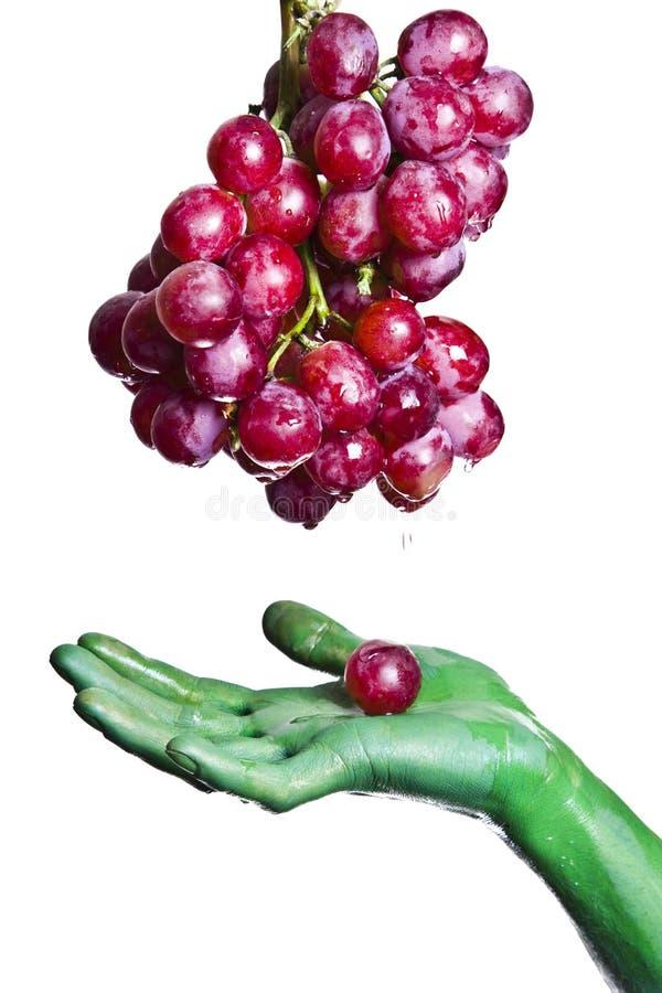 Rote Trauben stockbilder