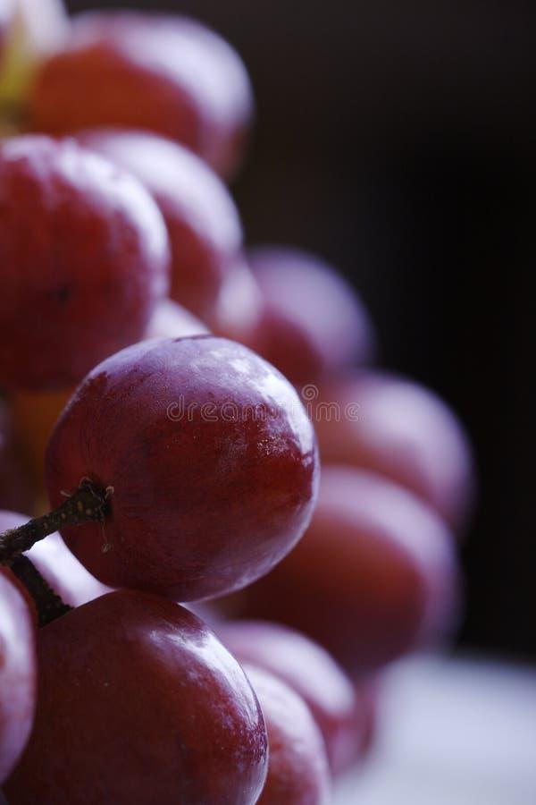 Rote Trauben stockfotografie