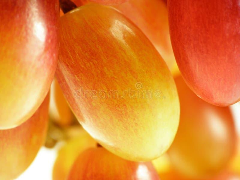 Rote Trauben stockfoto