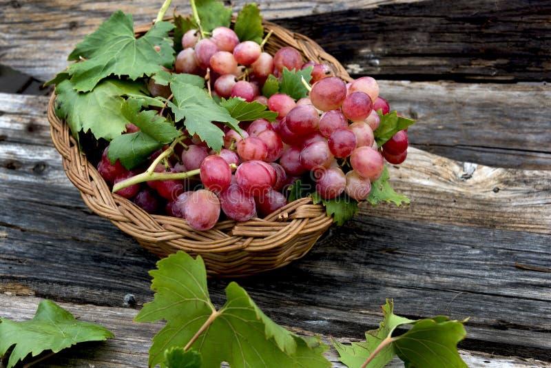 Rote Trauben im Korb lizenzfreies stockfoto