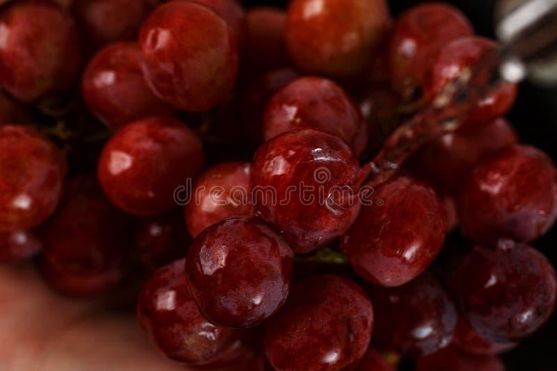 Rote Trauben unter fließendem Wasser stockfotografie