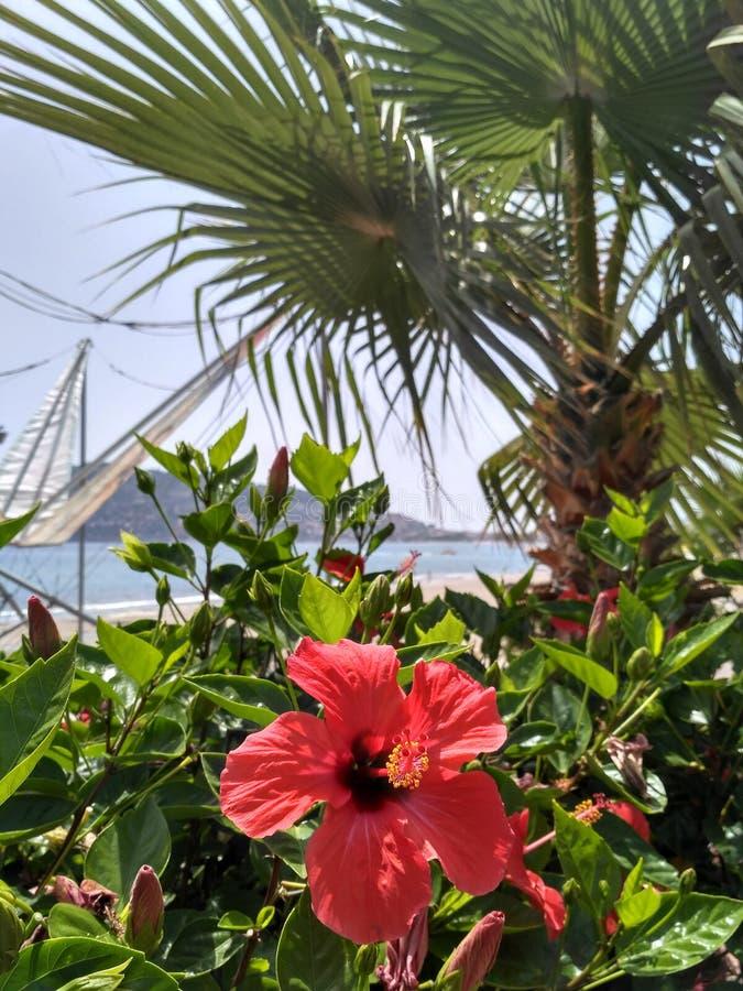 Rote tropische Blume auf dem Busch Schöne Ansicht über das Meer mit Palmen stockfotografie