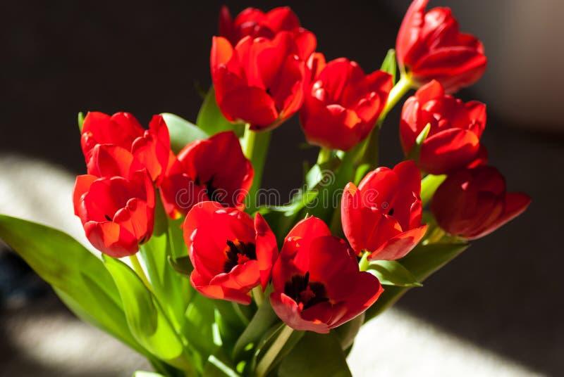 Rote Tulip Flower Bouquet stockbilder