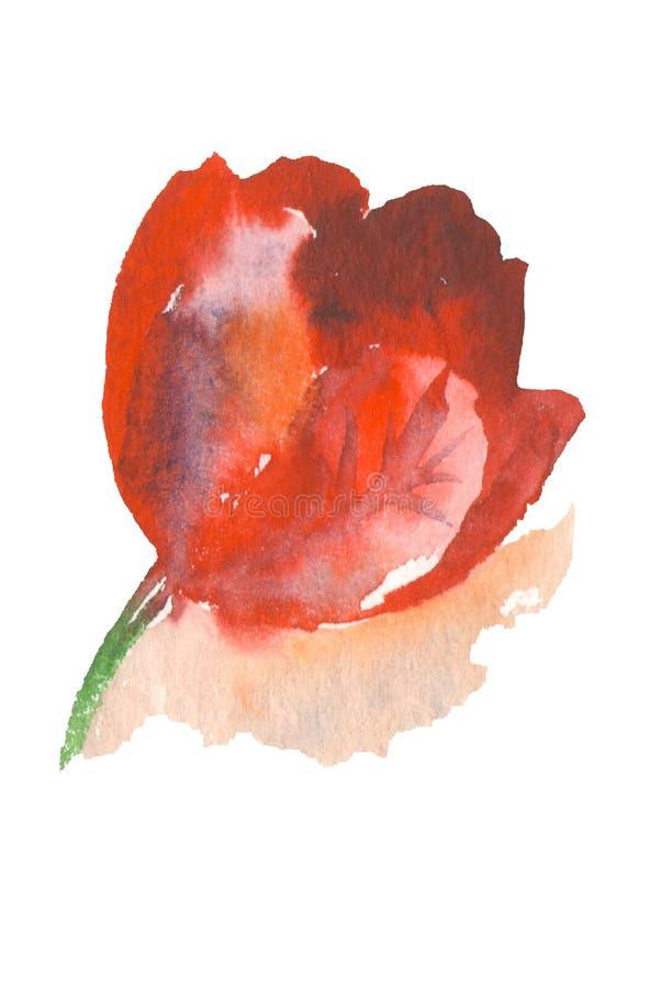 Rote Tulpe auf weißem backgroundn lizenzfreie abbildung