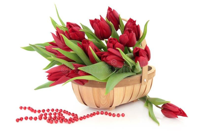 Rote Tulpe-Blumen lizenzfreie stockfotos
