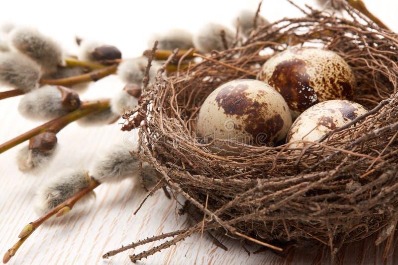 Download Rote Tulpe Und Farbige Eier Stockbild - Bild von hintergrund, nest: 90231859