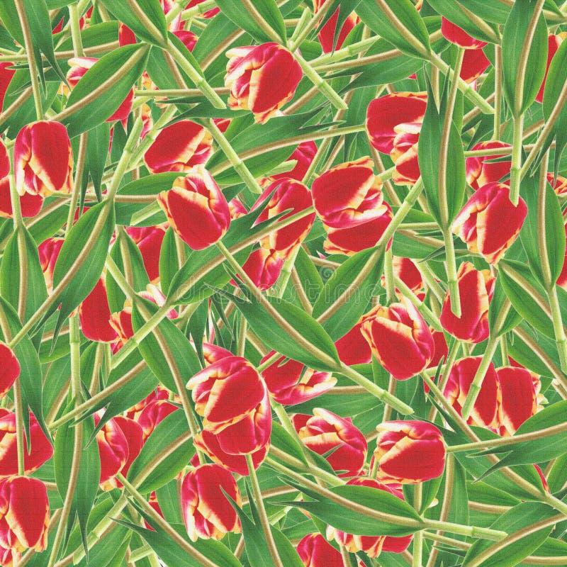 Rote Tulpen stock abbildung