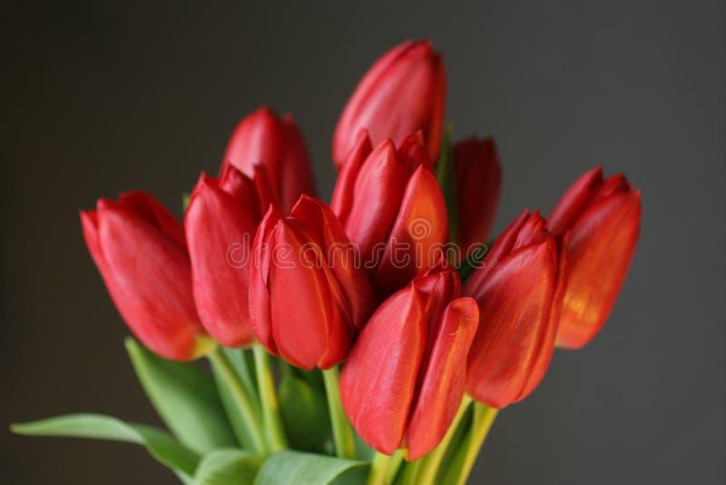 Rote Tulpen auf Schwarzem stockfotos