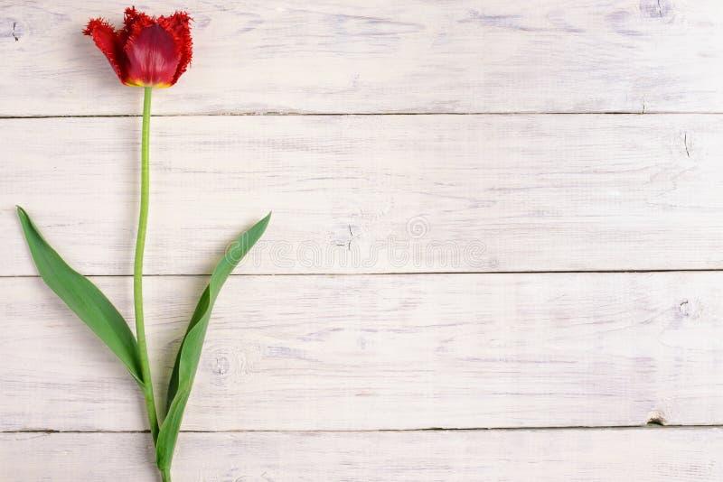 Rote Tulpenblume auf hölzernem Hintergrund Draufsicht, Kopienraum stockfotos