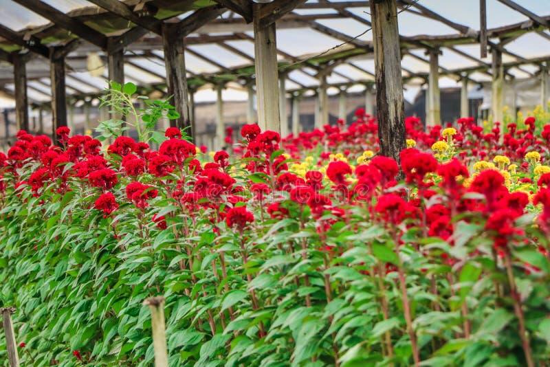 Rote und gelbe Blumen auf einem Gebiet stockfoto