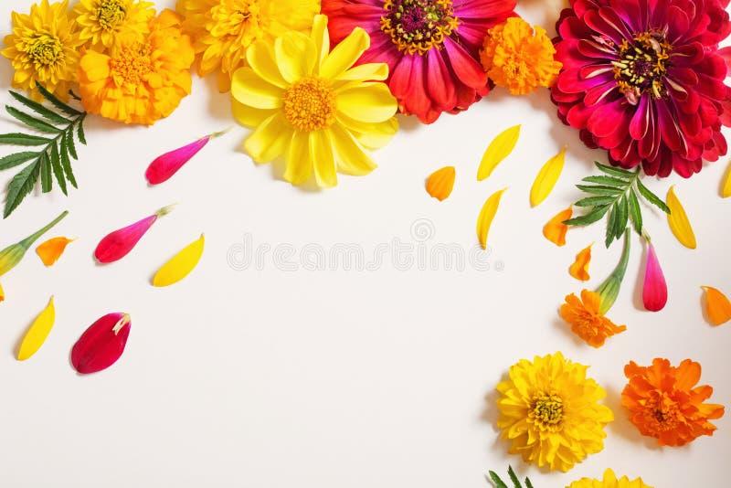 Rote und gelbe Blumen auf weißem Hintergrund lizenzfreie stockfotos