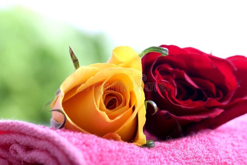 Rote und gelbe Rosen stockfoto
