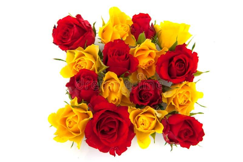 Rote und gelbe Rosen stockfotos
