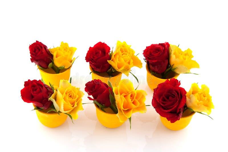 Rote und gelbe Rosen in den Eierbechern stockbilder