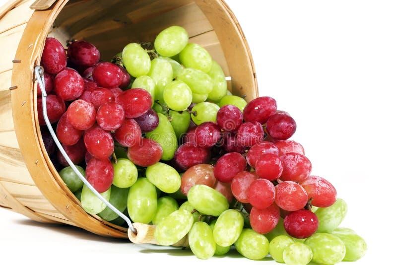 Rote und grüne Thompson-samenlose Trauben lizenzfreie stockbilder