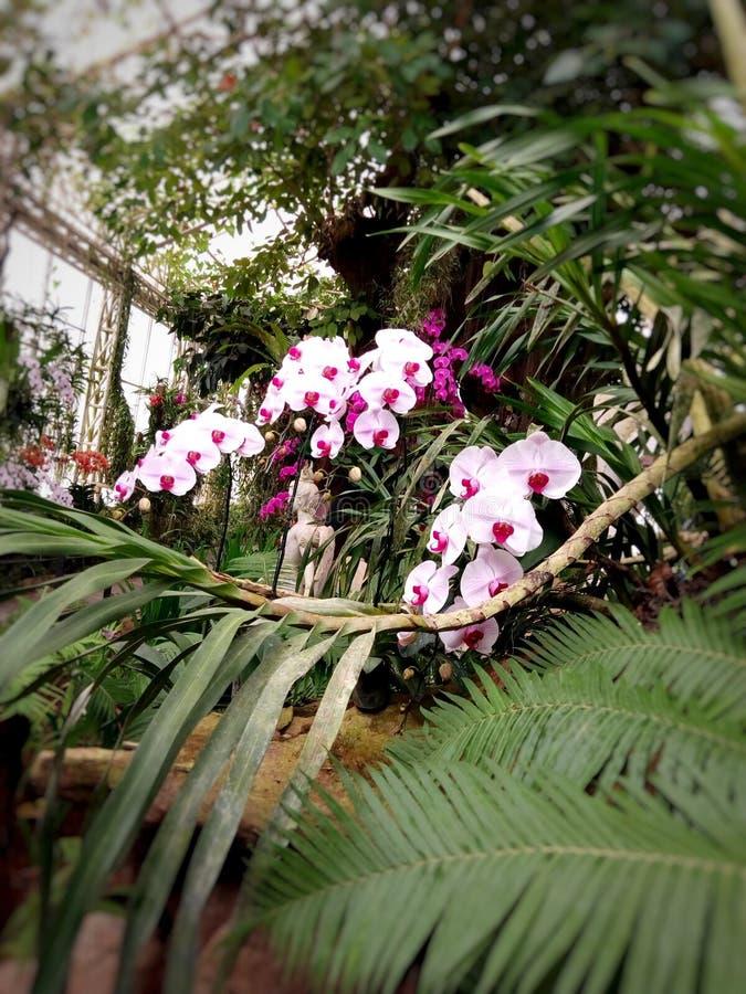 Rote und rosa Orchideenblumen lizenzfreie stockbilder