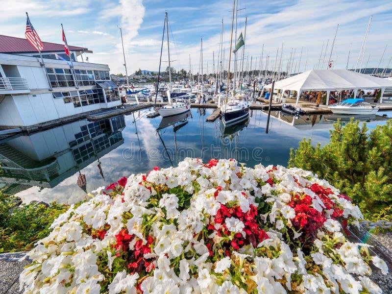 Rote und weiße Blumen verzieren den Küstenweg in Sidney, Vanco lizenzfreie stockfotografie