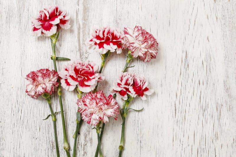 Rote und weiße Gartennelkenblumen auf Holz stockbild