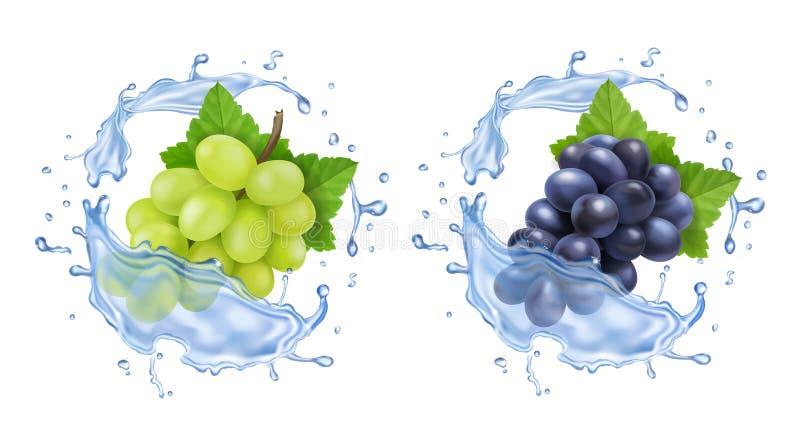 Rote und weiße Tafeltrauben in Wasserspritzen Bündel des realistischen Satzes der Weinreben vektor abbildung