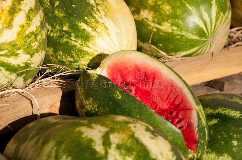 Rote Wassermelonen stockfotos