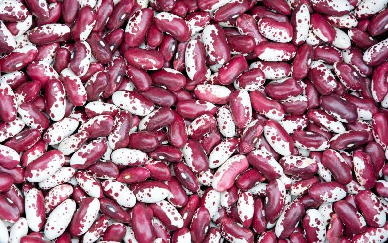 Rote weiße Bohnen lizenzfreies stockfoto