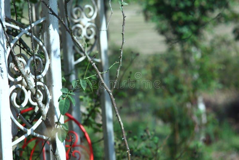 Rote weiße gelockte Formen der Patio-Möbel-Weinlese grüner Hintergrund stockfotografie