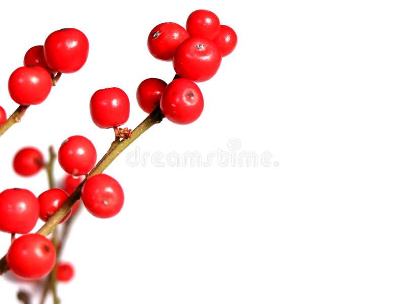 Rote Weihnachtsbeeren auf Weiß stockbild