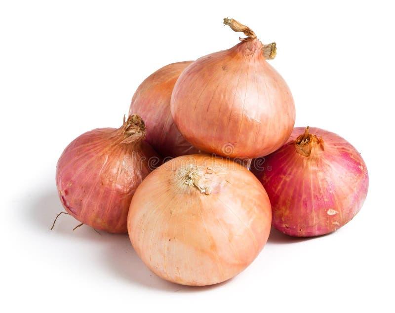 Rote Zwiebel auf Hintergrund stockbilder
