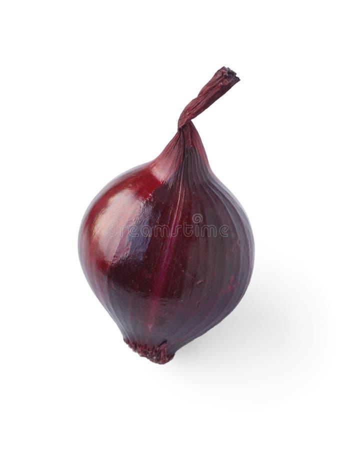 Rote Zwiebel vorbei auf weißem Hintergrund lizenzfreie stockfotos