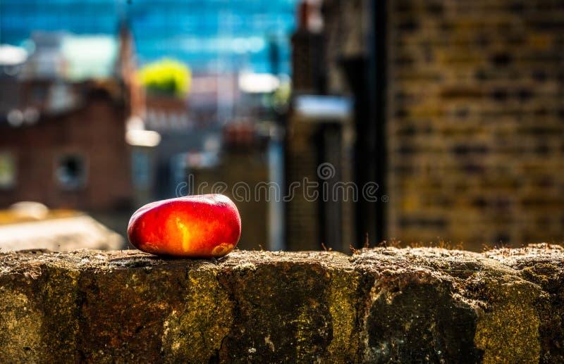 Roter Apfel, der auf Fensterbrett reift stockfoto