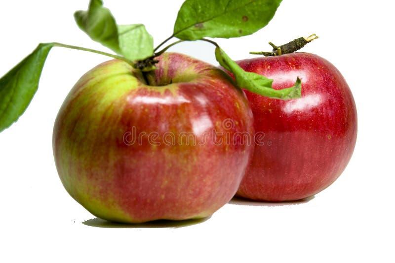 Roter Apfel royalty free stock photos