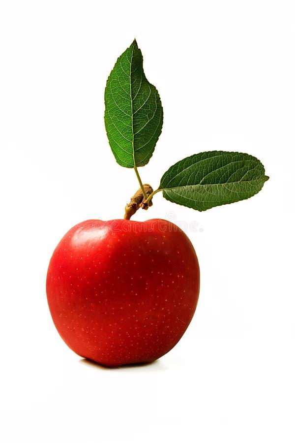Roter Apfel mit Blättern lizenzfreie stockfotos