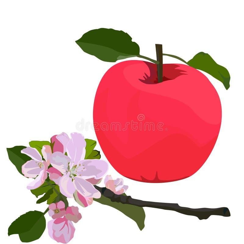 Roter Apfel und Niederlassung in der Blüte, flache lokalisierte Illustration des Vektors stock abbildung