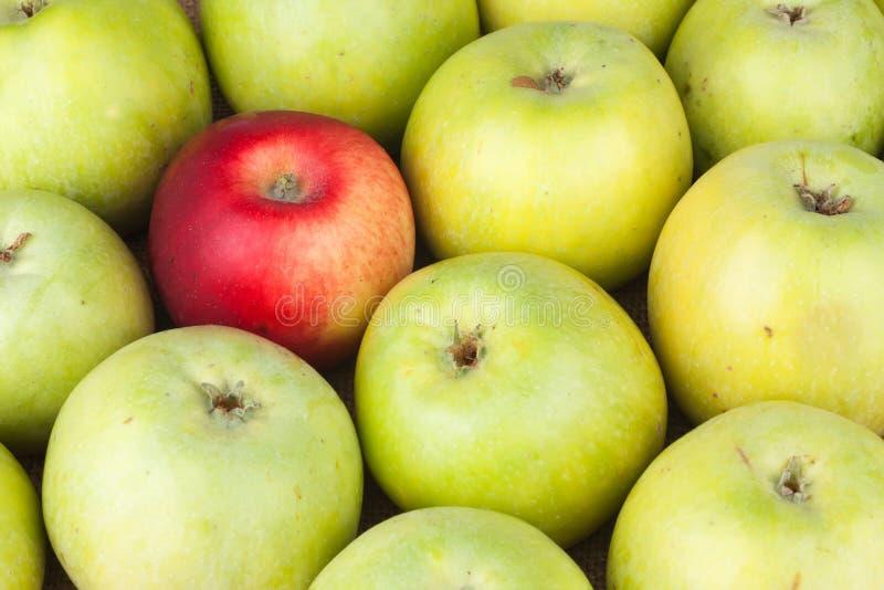 Roter Apfel unter den grünen Äpfeln, die auf Sackleinen liegen lizenzfreies stockfoto