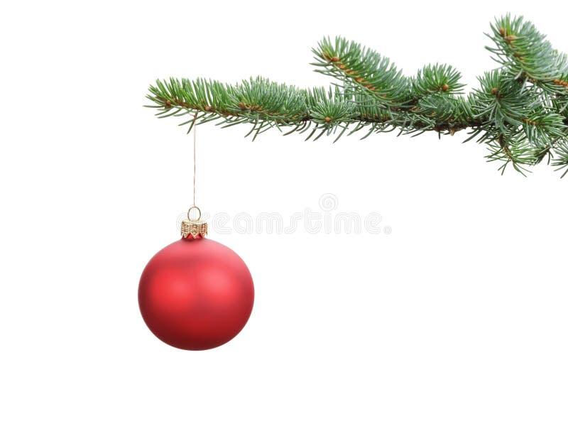 Roter Ball des satinierten Glases, der an der Weihnachtsniederlassung hängt lizenzfreie stockfotografie