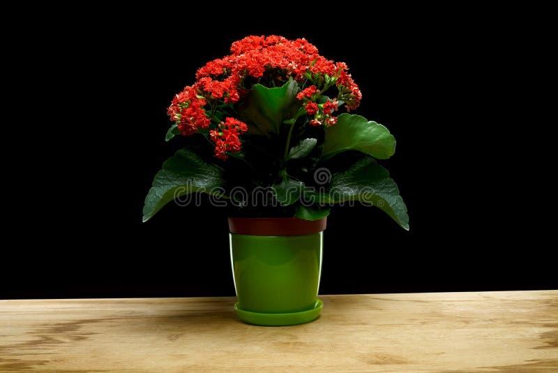 Roter blühender Blumentopf stockbild
