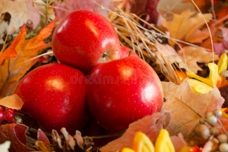 Roter-Deliciousäpfel lizenzfreies stockbild