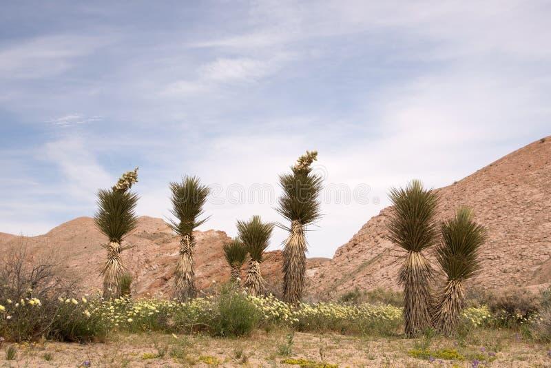 Roter Felsen-Schlucht-Nationalpark, Kalifornien, USA lizenzfreie stockfotos