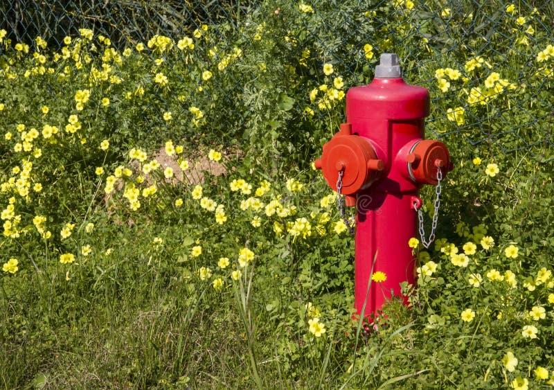 Roter Feuerlöscher steht heraus unter einem grünen Rasen mit Losen von lizenzfreies stockfoto