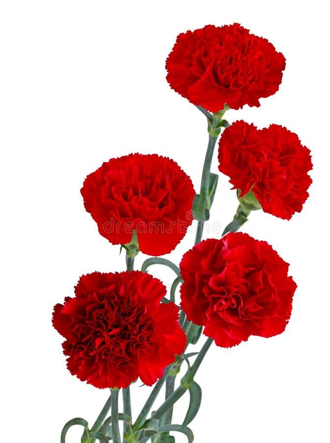 Roter Gartennelkenblumenstrauß stockfotografie