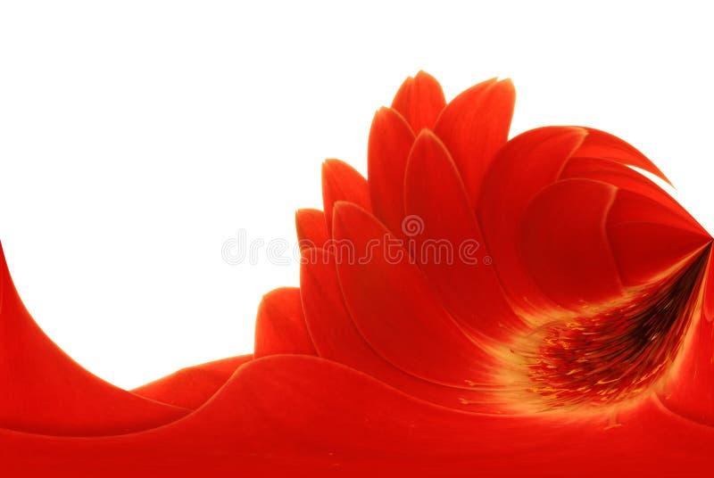 Roter Gerbera, abstraktes Feld stockbild