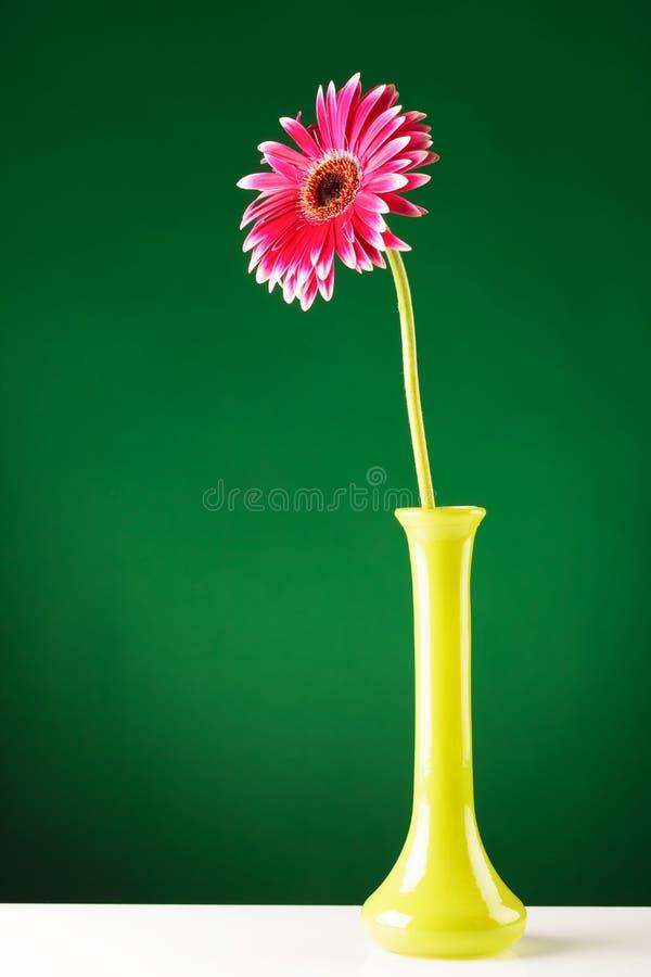 Roter Gerbera im gelben Vase auf grünem Schirm stockfotografie