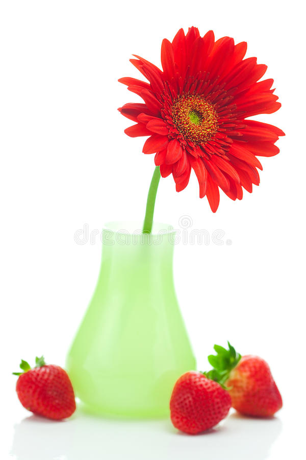 Roter Gerbera und Erdbeeren stockfotografie